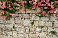 Цветы 70 фото