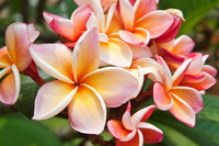 Цветы 2 (102 фото)